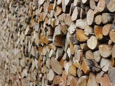 Təhsil Nazirliyi odun alır
