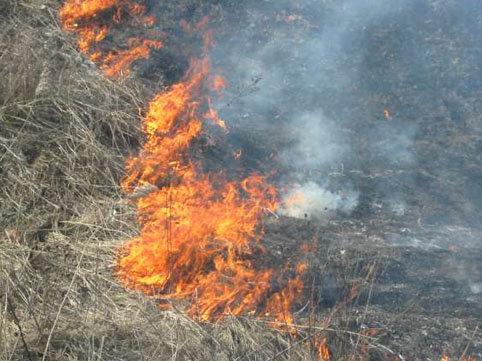 Qusarda 120 ha taxıl sahəsi yanıb