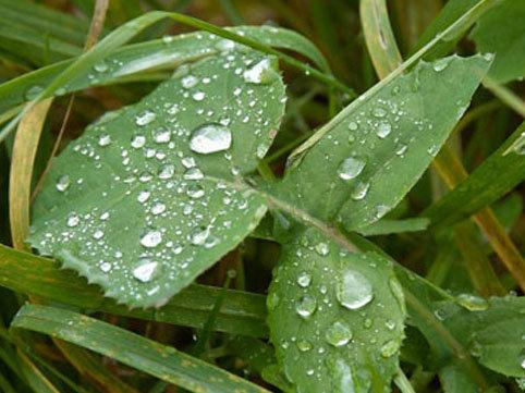 Bakıda havanın temperaturu aşağı düşəcək, yağış ehtimalı var - PROQNOZ