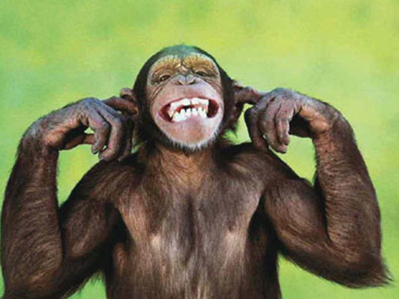 Varlıların yeni dəbi - Toylarda şimpanze əti yeyirlər
